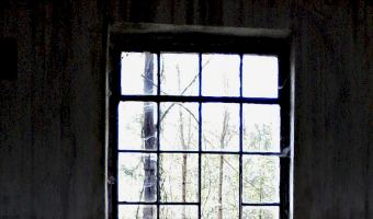Zakład produkcji leśnej l a s, pokój