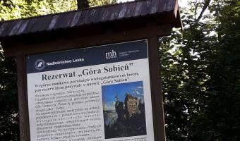 Ruiny Zamku Sobień,